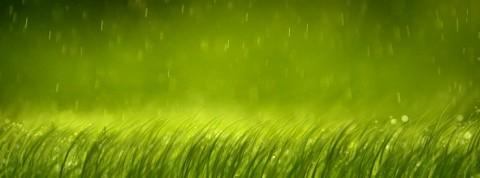 rain-on-grass-1